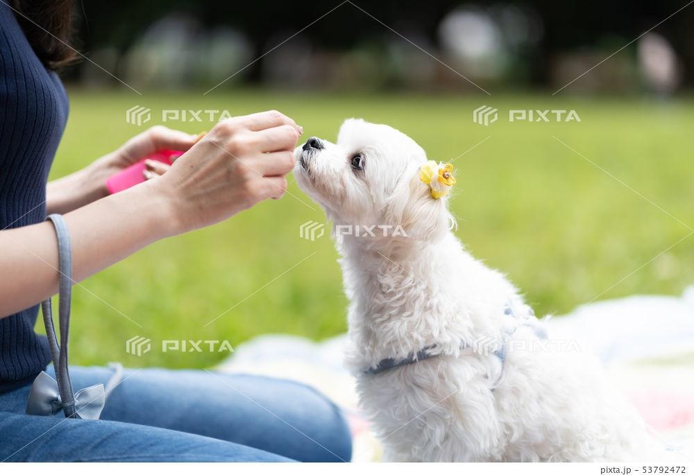 愛犬用無添加フードRuree